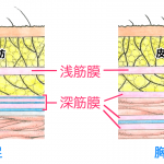筋膜リリースを解説します。