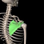 肩こりの原因と分類