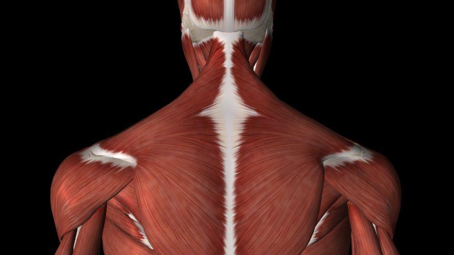 肩こりや首こりを慢性化させないでほしい理由と慢性化させないための日常生活の工夫